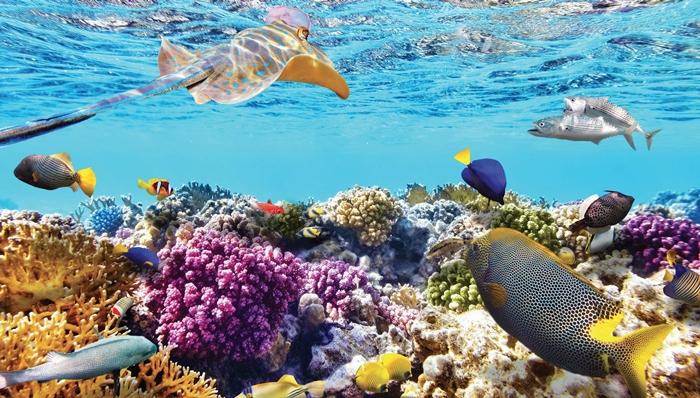 Đặt vé đi máy bay đi Nha Trang tháng 8, 9 tham gia hoạt động lặn biển ngắm san hô