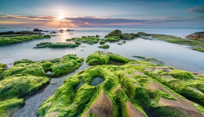 Hòa mình vào thiên nhiên ở rạn Nam Ô