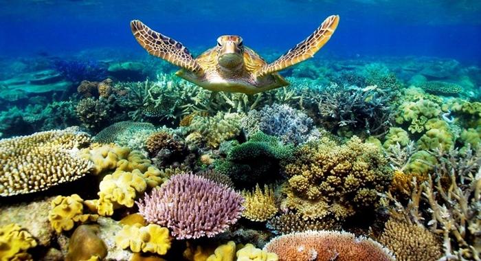Trải nghiệm lặn biển ngắm san hô ở Phú Quốc